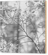 Shapes Of Nature Wood Print