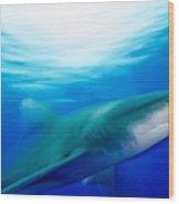 Shark In Rapid Motion Wood Print