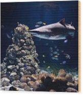 Shark In Zoo Aquarium Wood Print