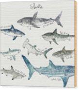 Sharks - Landscape Format Wood Print
