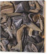 Sharks Teeth 8 Wood Print