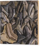 Sharks Teeth 9 Wood Print