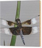 Sharp Focus Dragonfly Wood Print