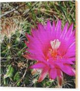 Pincushion Cactus - Coryphantha Vivipara Wood Print