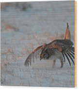 Sharptail Grouse On Snow Wood Print