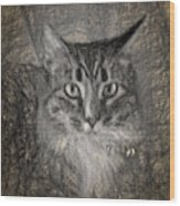 Shasta Wood Print
