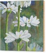 Shasta Daisies Wood Print
