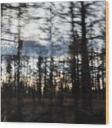 Shasta Trinity National Forest Wood Print