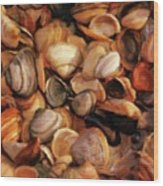 She Sells Sea Shells Wood Print