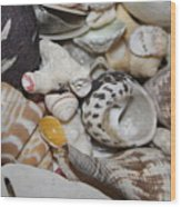 She Sells Seashells Wood Print