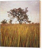 Shea Tree In Field, Near Lira, Uganda Wood Print