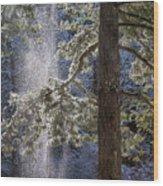 Shedding Snow Wood Print