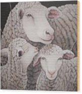 Sheep Ahoy Wood Print