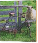 Sheep And Bicycle Wood Print