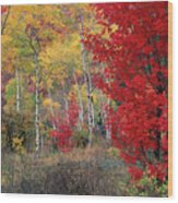 Sheep Canyon In Autumn Wood Print