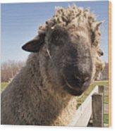 Sheep Face 2 Wood Print