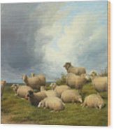 Sheep In A Pasture Wood Print