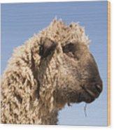 Sheep In Profile Wood Print