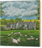 Sheep In Repose Wood Print