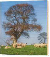 Sheep In Somerset - Impressions Wood Print