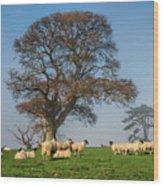 Sheep In Somerset Wood Print