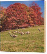 Sheep In The Autumn Meadow Wood Print