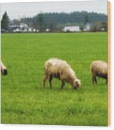 Sheep On The Range Wood Print