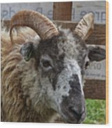 Sheep One Wood Print