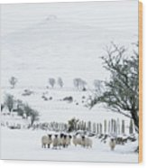 Sheep Shelter  Wood Print
