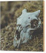 Sheep Skull Wood Print