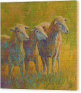 Sheep Trio Wood Print by Marion Rose