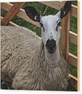Sheep Two Wood Print