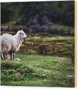 Sheep View Wood Print