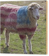Sheep With American Flag Wood Print by Garry Gay