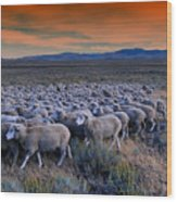 Sheepherder Life Wood Print