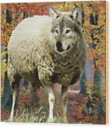 Sheep's Clothing Wood Print