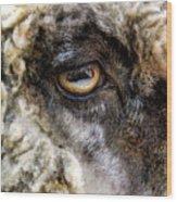 Sheep's Eye Wood Print