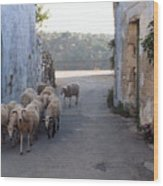 Sheeps Of Crete Wood Print