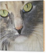 Shelby's Eyes 4 Wood Print