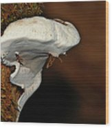 Shelf Fungus On Bark - Quinault Temperate Rain Forest - Olympic Peninsula Wa Wood Print by Christine Till