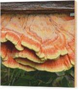 Shelf Mushroom Wood Print