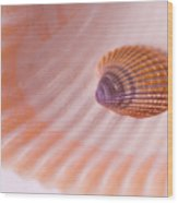 Shell And Baby Shell Wood Print