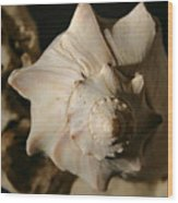 Shell And Driftwood Wood Print