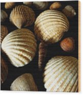 Shell Art - D Wood Print