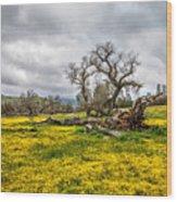 Shell Creek Awash In Yellow Wood Print