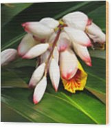 Shell Ginger Flowers Wood Print