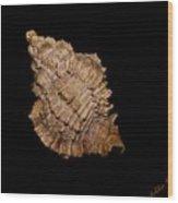 Shell Mon 2  - Photosbydm Wood Print