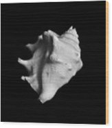 Shell No. 2 Wood Print