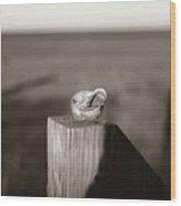 Shell On Post Wood Print