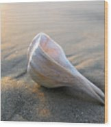 Shell On The Beach Wood Print